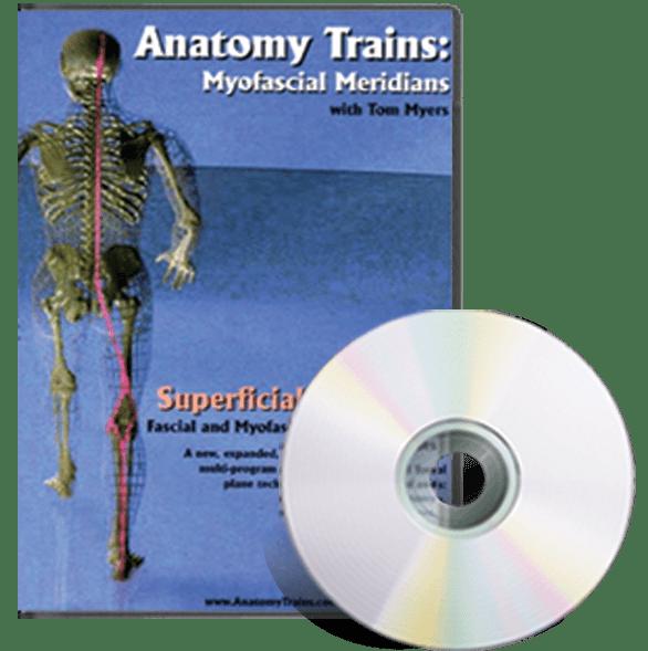 Anatomy Trains Vol 4 Superficial Back Line Dvd Ultimate Massage