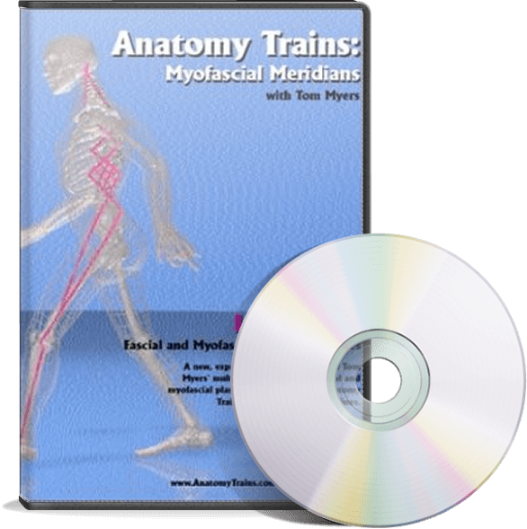 Anatomy Trains Vol 5 Lateral Line Dvd Ultimate Massage Solutions