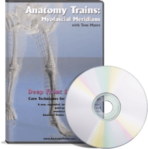 Anatomy Trains Vol 8: Deep Front Line - Lower Portion DVD